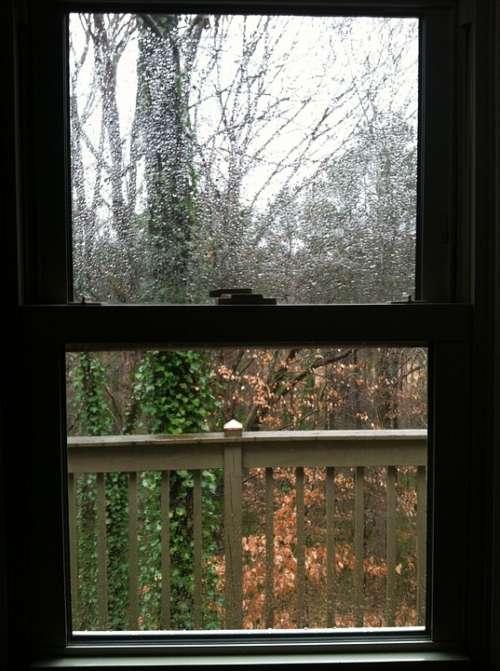 Window Nature Rain Rain Drop Raindrop Rain Drops
