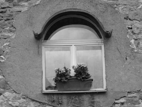 Window Lonely Alone Black And White Plant Glass