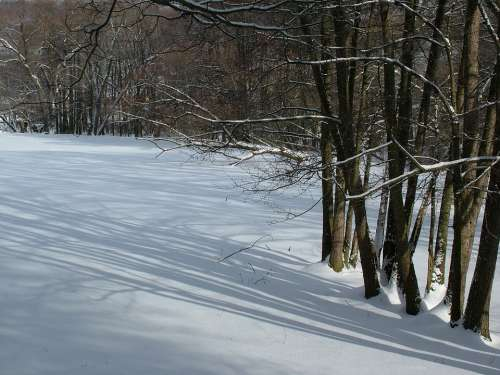 Winter Trees Light Shadow Snow