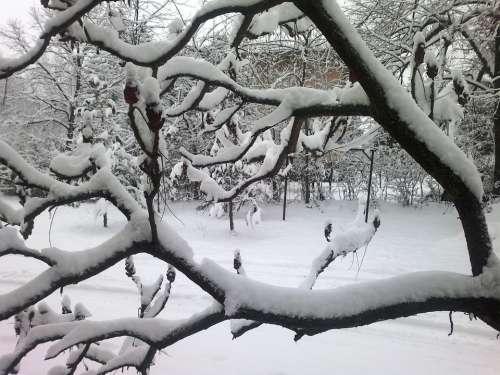 Winter Snow February Winter Mood