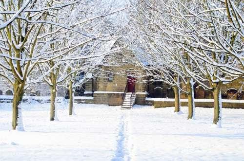 Winter Seasons Snow Snowy Tree Trees Branch