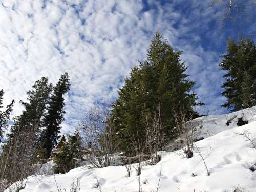 Winter Snow Season Cold Cloudy Sky Trees Fir