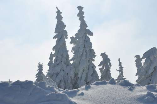 Winter Mountains Snow Spruce White View Landscape