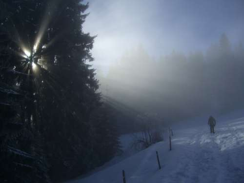 Winter Fog Firs Sunbeam Light Snow Wanderer