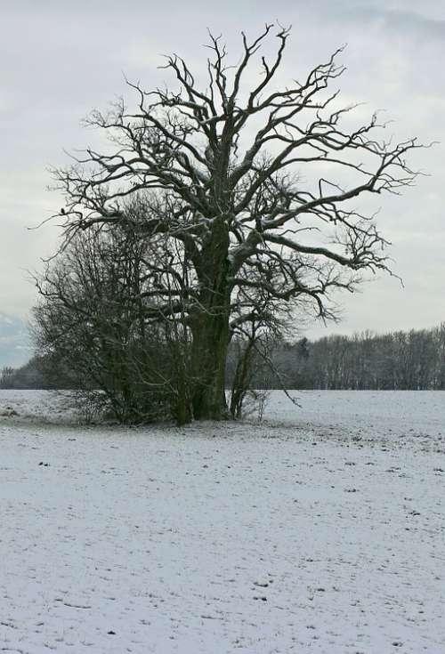 Winter Snow White Silhouette Tree Individually