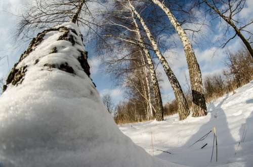 Winter Snow Tree Nature Birch