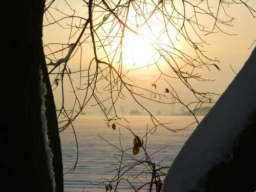 Winter Sunset Tree Branches Snow Winter Mood