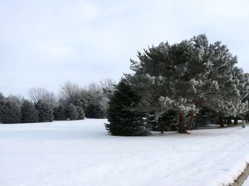 Winter Snow Trees Nature Landscape White