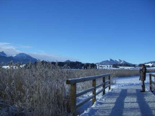 Winter Alpine Panorama Lake Bridge Reed Ripe