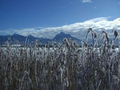 Winter Snow Mountain Panorama Alpine Lake Reed