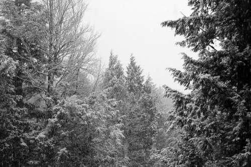 Winter Trees Sky White Landscape Black And White