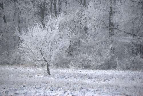 Winter Ice Frost Wood Forest