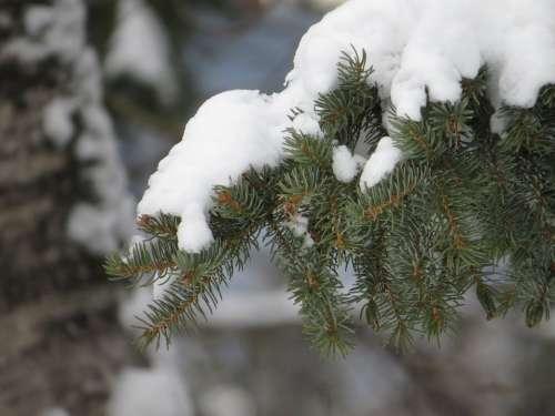 Winter Snow Tree Branch White Snowy Nature