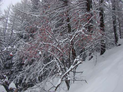 Winter Nature Tree Forest