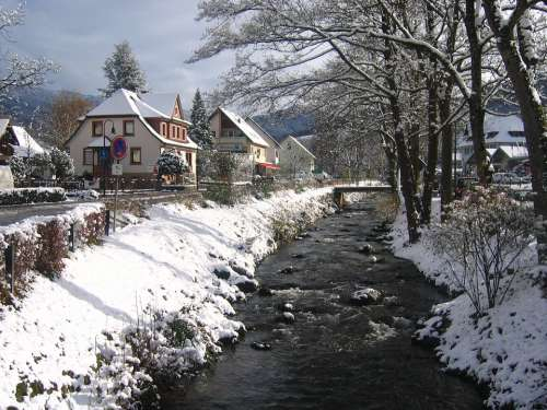 Winter Torrent Glottertal Snow Bach Cold Water