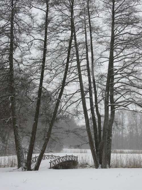 Winter Trees Web Cold Nature Snow Bridge Snowy