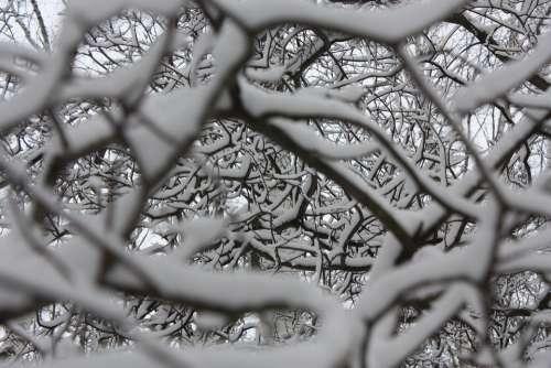 Winter Snow Snowflakes