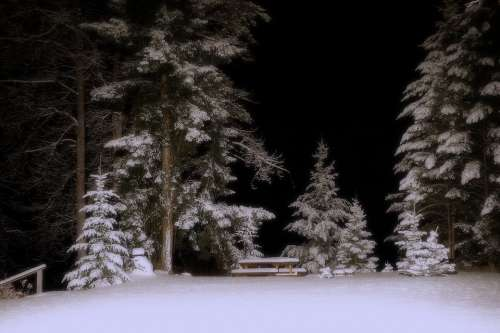 Winter Winter Dream Snow Cold Trees Night
