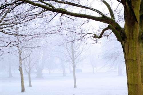 Winter Frost Snow Nature Macro Landscape