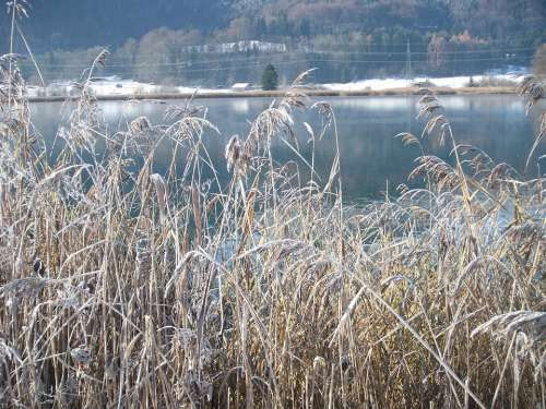 Winter Lake Wintry Frozen Nature Frost Cold Reed