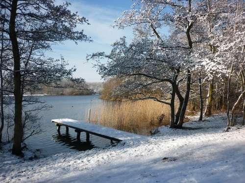Winter Landscape Snow Reed