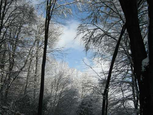 Winter Sky Forest Trees