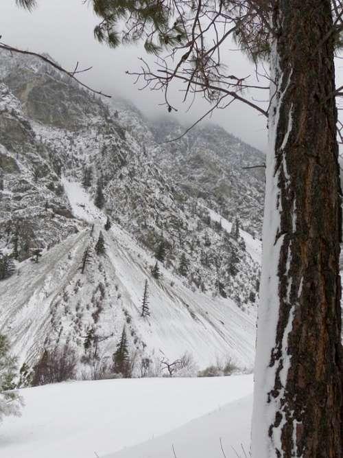 Wintry Landscape Storm Tree Mountain Slope Snowy