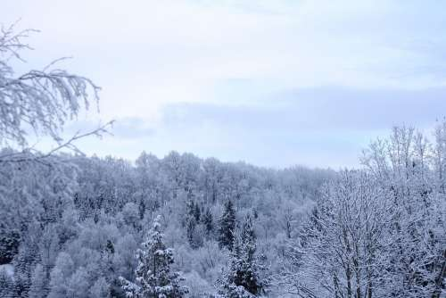 Wintry Winter Forest Sky Blue Winter Clouds White