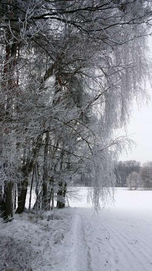 Wintry Landscape Winter Ice Trees Snowy