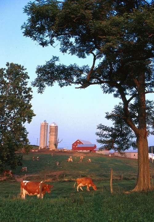 Wisconsin Landscape Farm Rural Rustic Cattle Sky