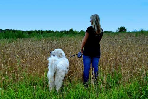Woman Dog Nature To Take The Dog Out Walk Person