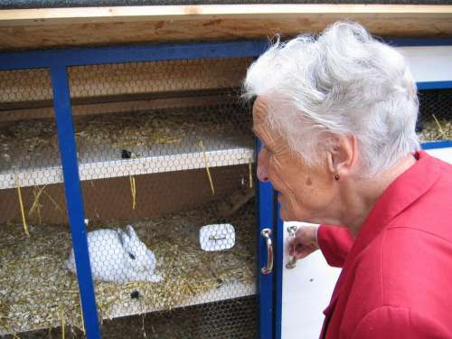 Woman Old Grandma Hare Rabbit Hutch Dependent