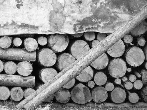 Wood Supply Winter Tree