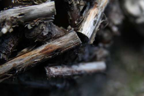 Wood Horse Mackerel Glued Ball
