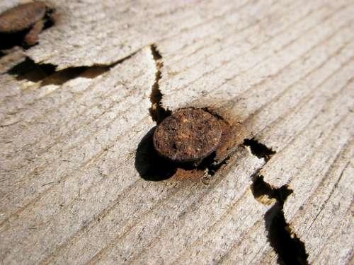 Wood Pua Oxide Corroded