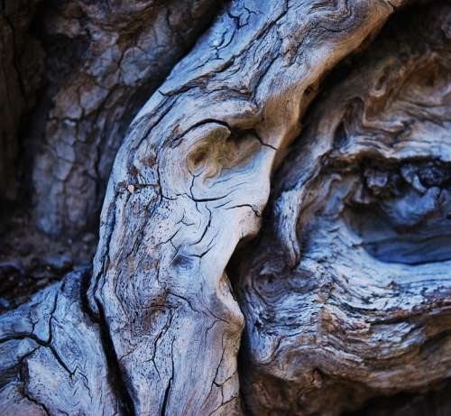 Wood Faces In Wood Nature Old Dry Wood Dead Tree
