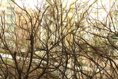 Wood Twig Landscape Winter A Bony