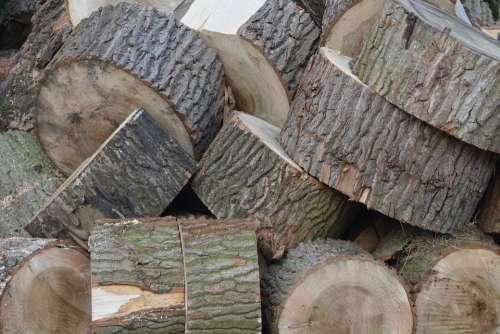 Wood Tree Tree Rings