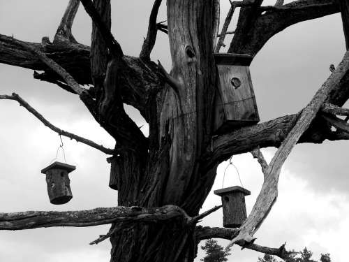 Wood Dry Wood Dead Tree Odu