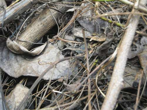 Wood Leaf Dry
