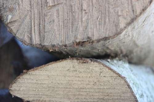 Wood Sawed Off Stacked Firewood Tree Like