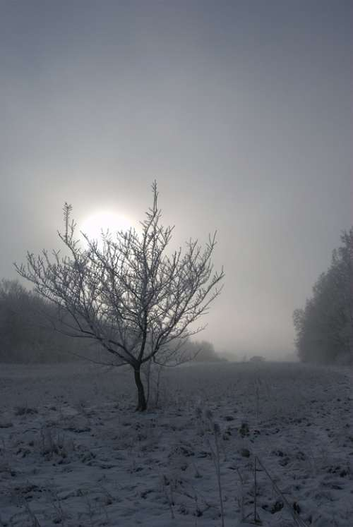 Wood Frost Fog Winter Snow