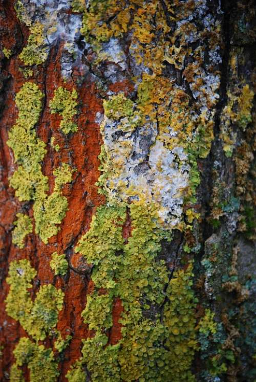 Wood Lichen Forest Bark Plant