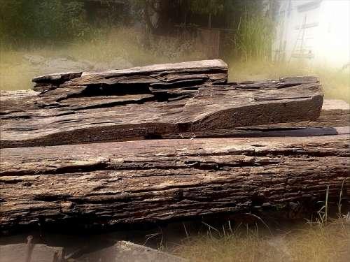 Wood Tree Trunks Nature Old Tree Logs Boles