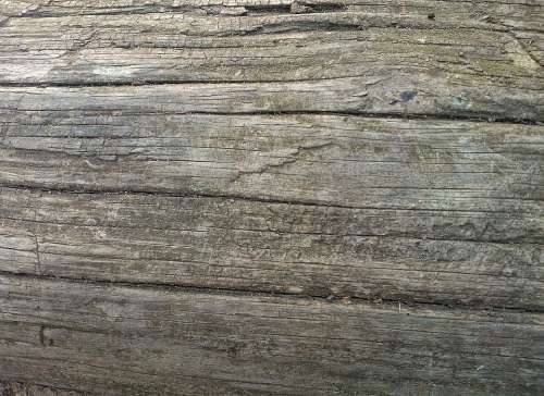 Wood Texture Wooden Log Bark Rough Natural