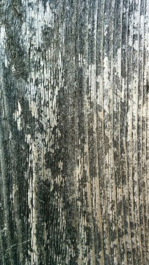 Wood Texture Pattern Wooden Material Timber