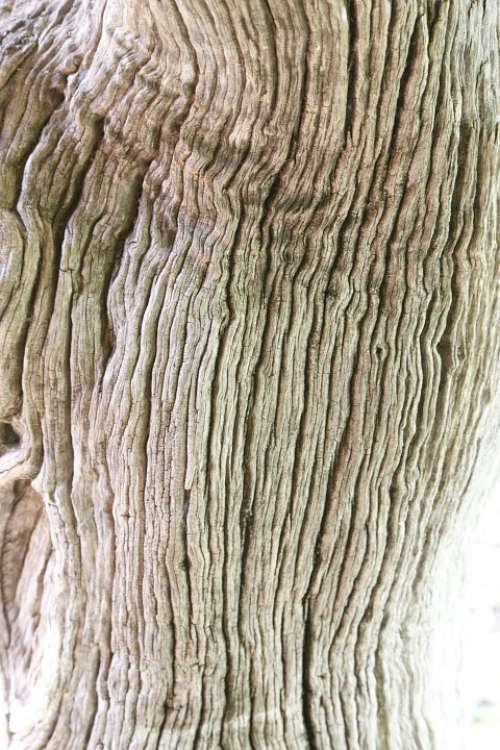 Wood Tree Bark Old Nature Natural Wooden Texture