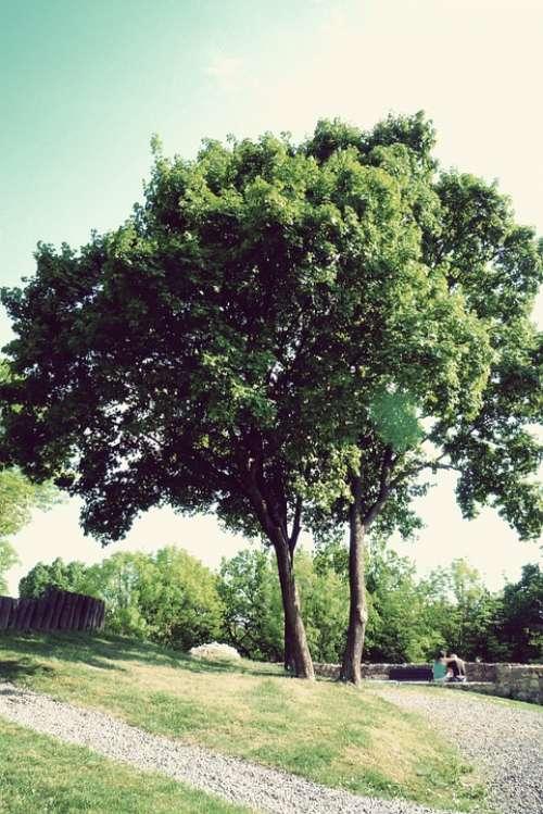 Wood Nature Green Plant Foliage Mood Sunshine