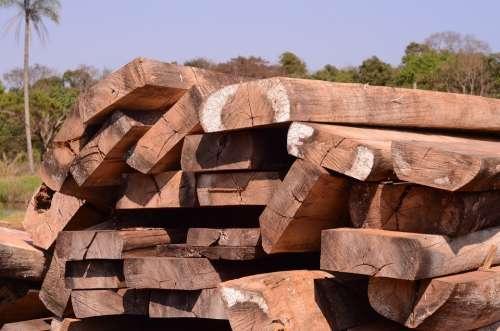 Wood Natural Wood Forestry Oak Tree Hardwood