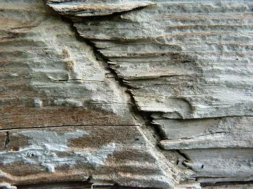 Wood Macro Detail Old Old Board